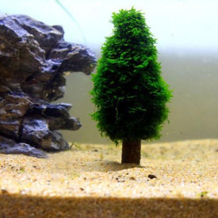 Moosbaum Aquarium